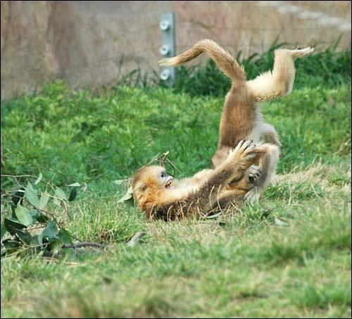 Monkey fun by wiktorg
