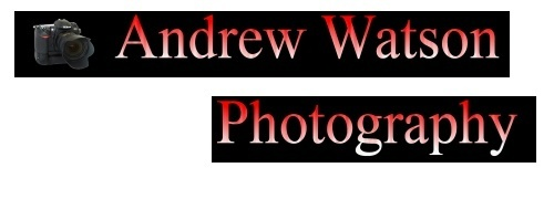 Can anyone help me make a header for my site? by Andy1979