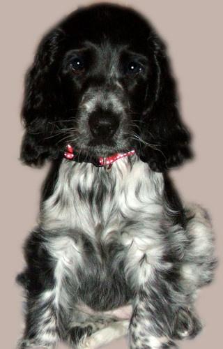 Puppy Eyes by CornishEyes
