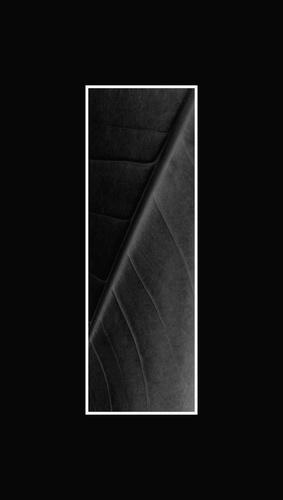 leafy by lwis