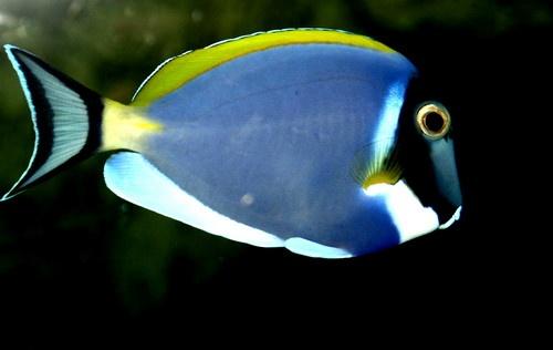 A bit fishy by Bluebottle11117