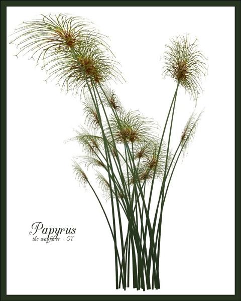 Papyrus by wayfarer