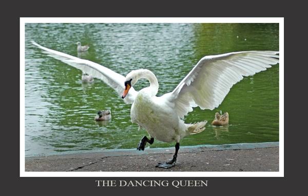 THE DANCING QUEEN by johnianmckinnon
