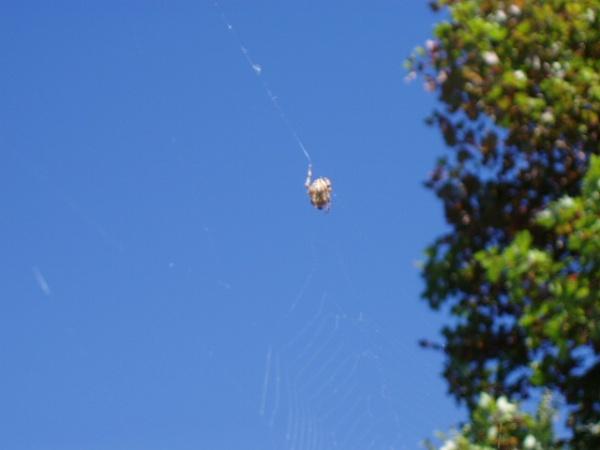 Sky Web with Spider by chuckspics