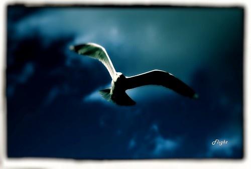 The Flight by rohanps