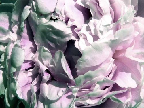 flower by Nade