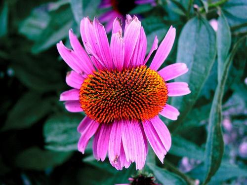 Funky Flower by zenmastr