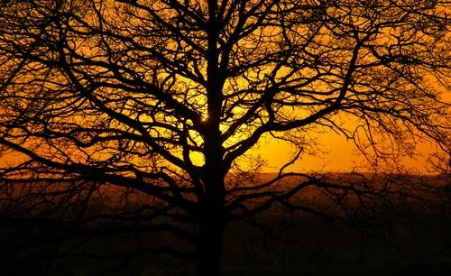 Sunset Badbury Rings by Livy