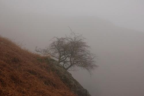 a little tree by sepulturek