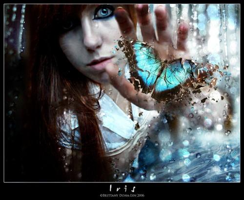 Iris by Asilwen
