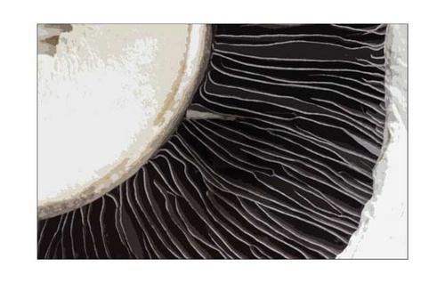 Mushroom by block119er