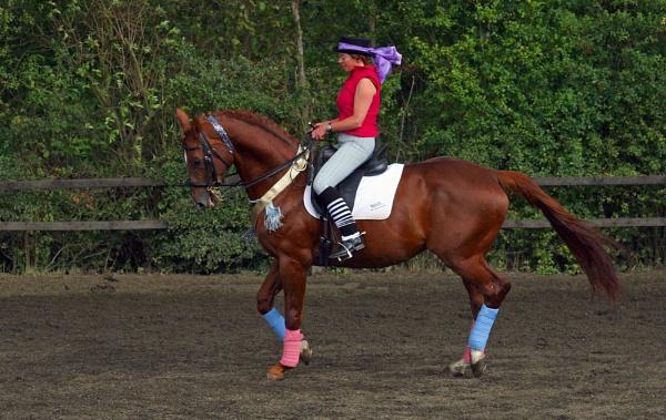 Equestrian Display by una