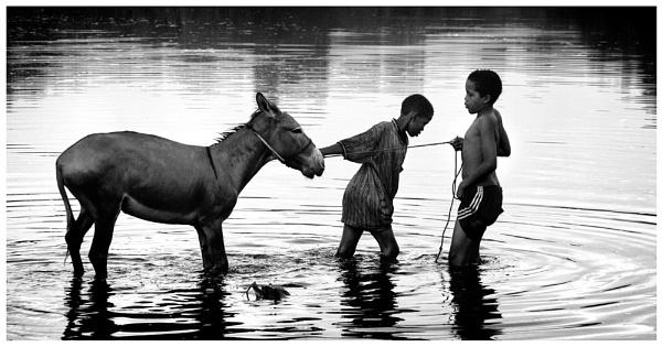 Eeyore\'s Don\'t Like Water by david deveson