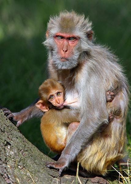 Mum & Baby by teddy