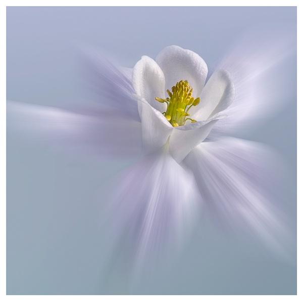delicate by hayleyk