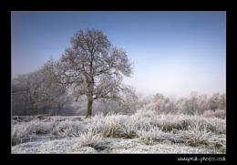 The Freezing Fog