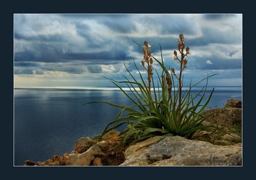 Wild plant by Ruggieru