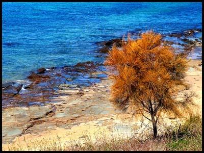 Oz Tree by Beta1