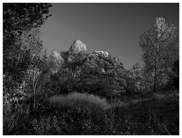 Treetops by Jamawa