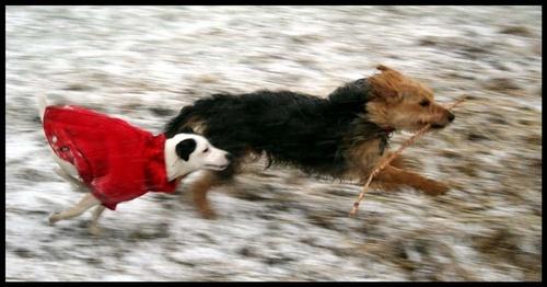 chase me! by Sarahmann