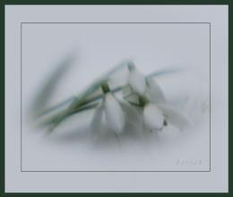 snowdrops lensbaby