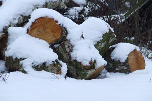 Snowy Log\'s. by Ianuk42