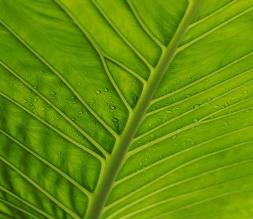 Arty Leaf! by yasika