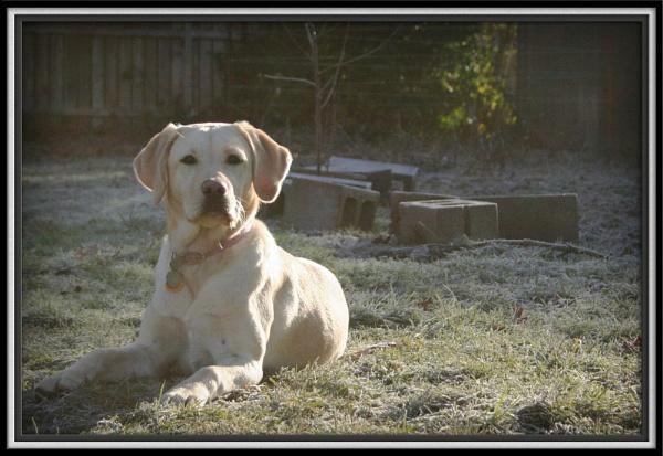*In the Frost* by bricjen