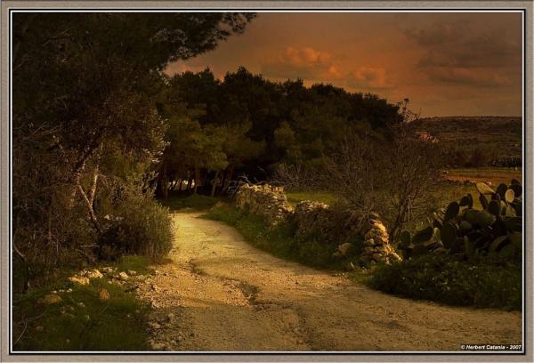 Into The Woods by BertC