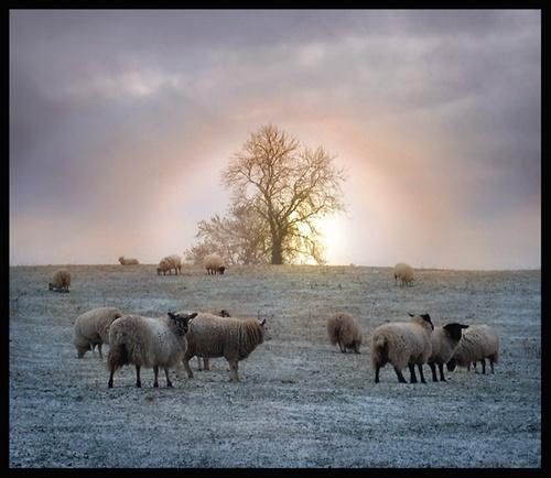 Winter Sun by becca_cusworth
