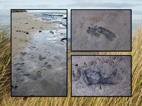 FormbyFootprints by Jennie277