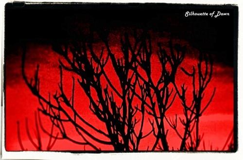 Red Dawn by rohanps