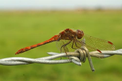 bug on a wire by gaz revs