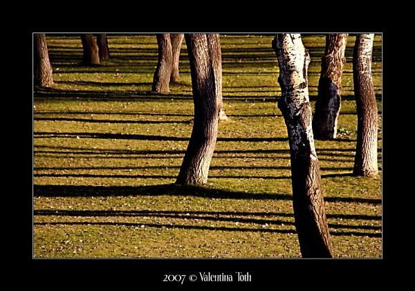 Treelines by vtoth