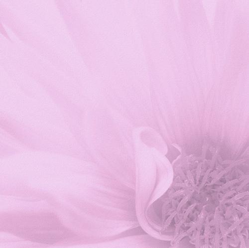 Lilac by carmenfuchs