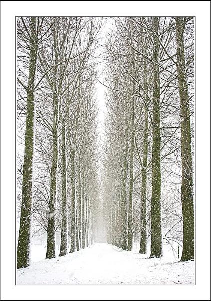 Snowy Lane by conrad