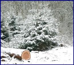 Cold logging