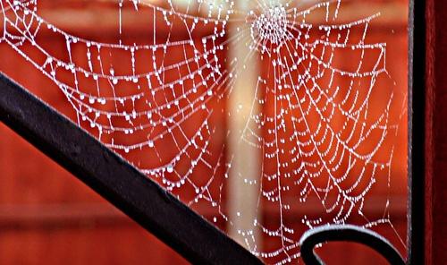 frosty siders web by evelen