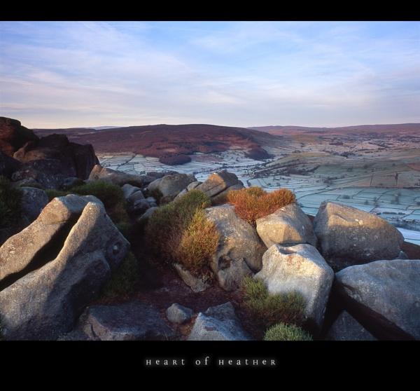 a heart of heather by paulrankin
