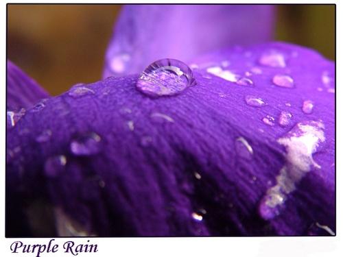 Purple Rain by EmmaStu