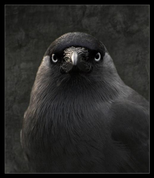 Blackish Bird by backbeat