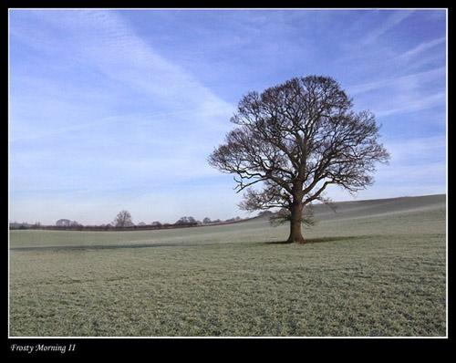 Frosty Morning II by Deego
