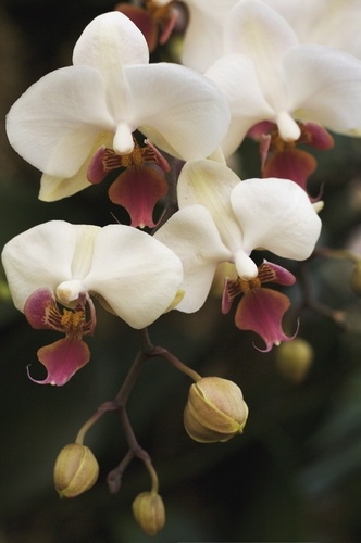 Kew\'s orchids by yasika