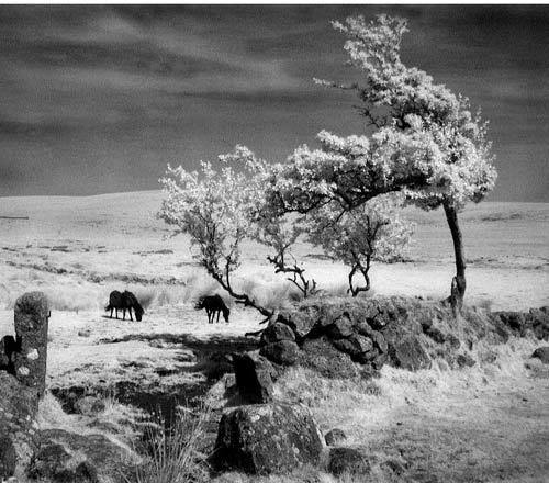 Mood of the Moor by gpwalton