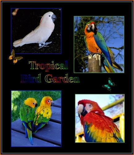 Tropical Bird Garden by KKmoments