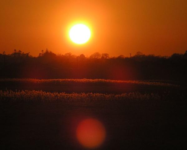 Golden Reeds by DJMidnight