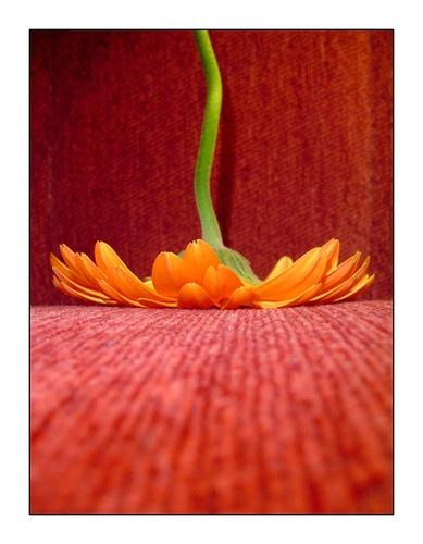 Flowering V by Barbi