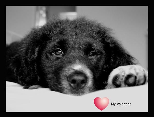 My Valentine\'s present by mommy2cutekids