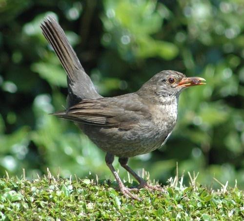 Bird taken in freinds garden by sparklep