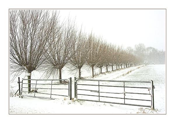 Snowy Scene by conrad